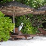 Reethi Beach Bird
